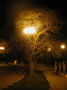 Přímé osvětlení koruny stromů pro ně představuje další zátěž a stres